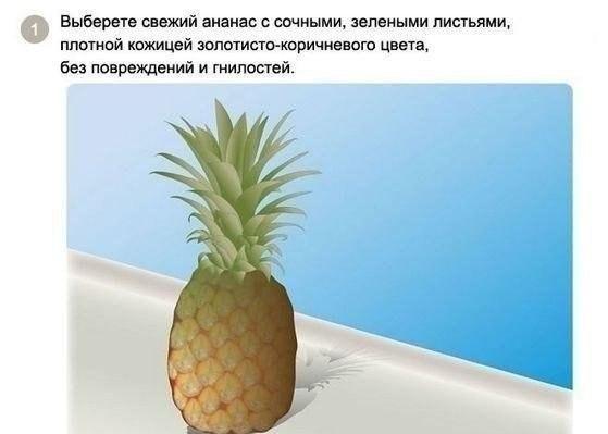 выращиваем ананас