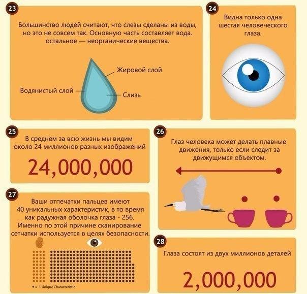 интересные факты о глазах5
