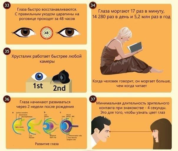 интересные факты о глазах7