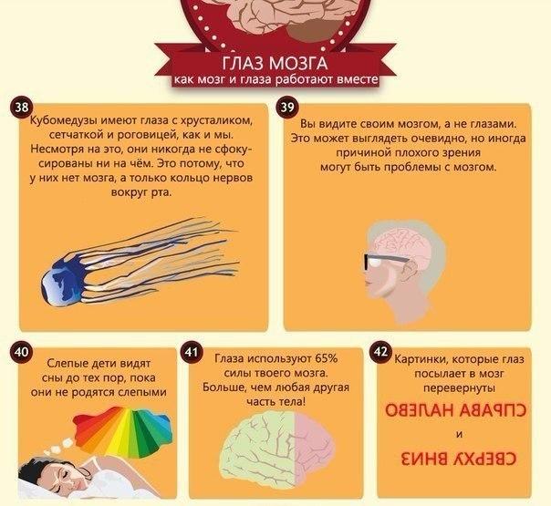 интересные факты о глазах8