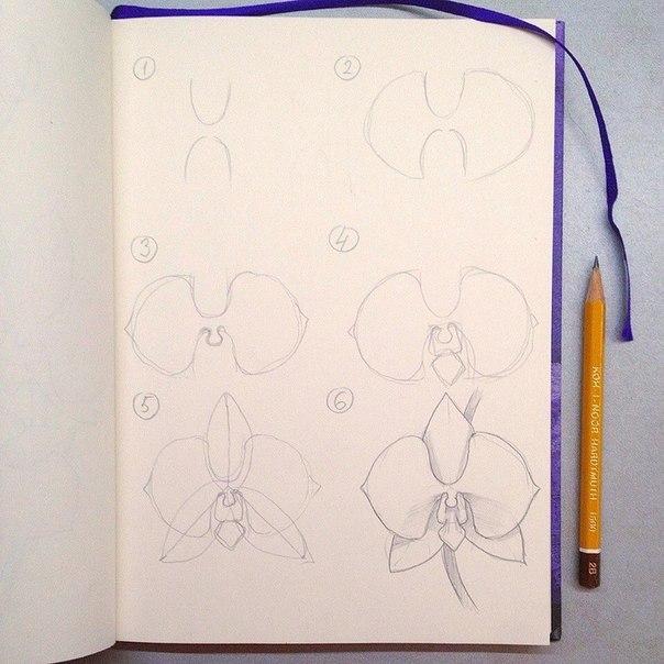 рисуем орхидею