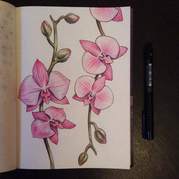 рисуем орхидею10