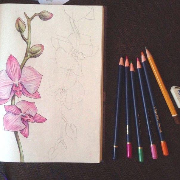 рисуем орхидею2