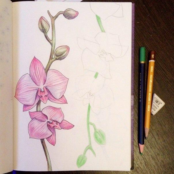 рисуем орхидею3
