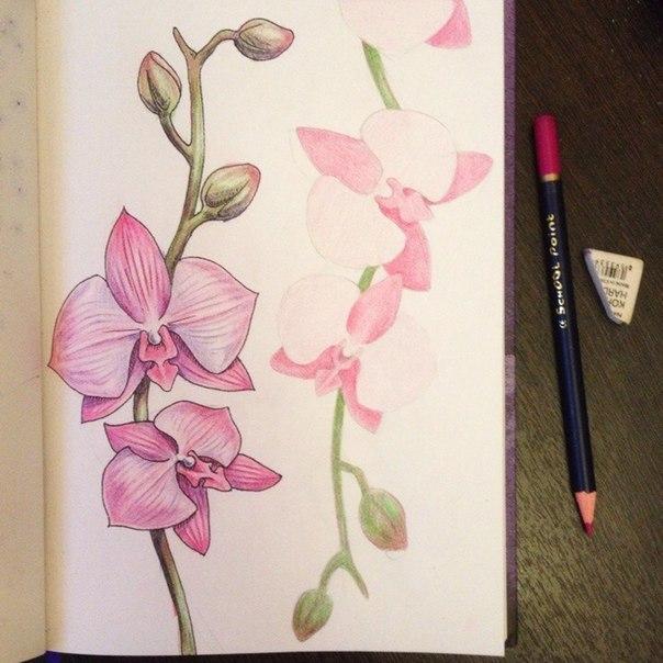 рисуем орхидею4