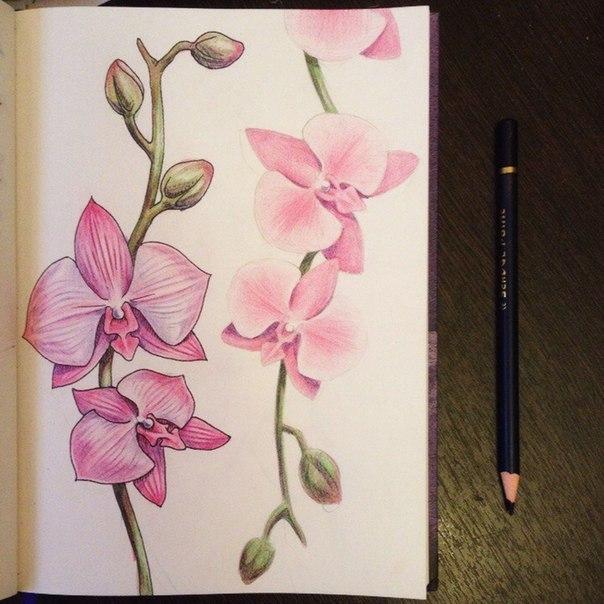 рисуем орхидею6