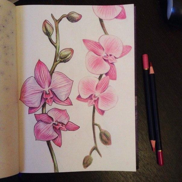 рисуем орхидею7