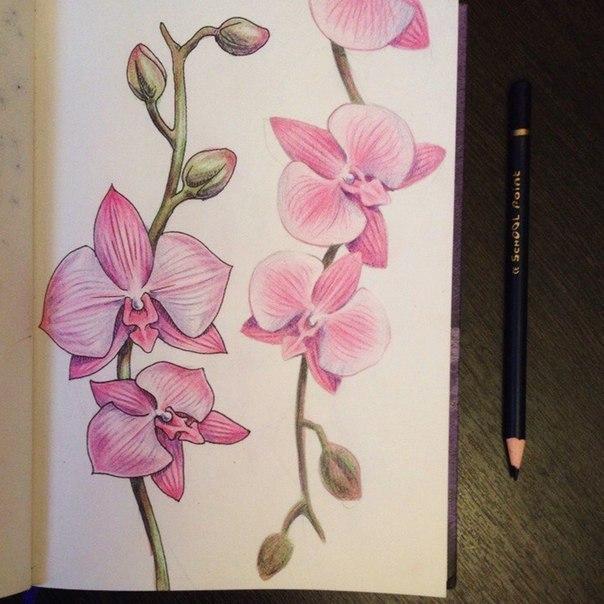 рисуем орхидею8