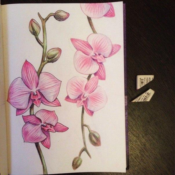 рисуем орхидею9