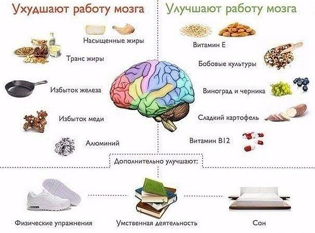 Важные продукты для питания мозга   Хитрости жизни bf9b14f5124