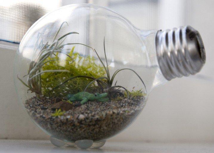 bulbs13