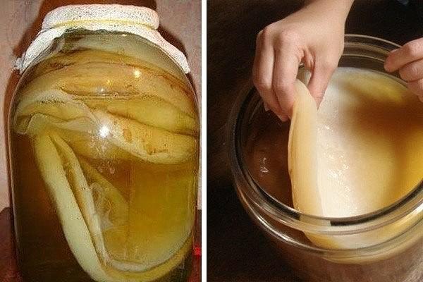Как сделать чайный гриб в домашних условиях фото 456