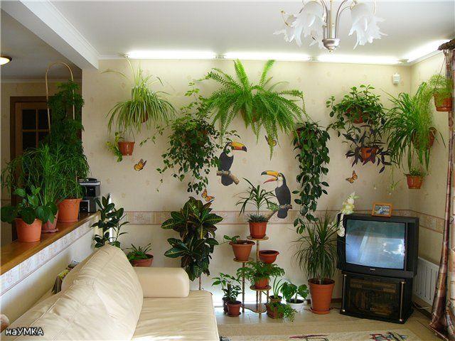 Комнатные цветы в квартирах