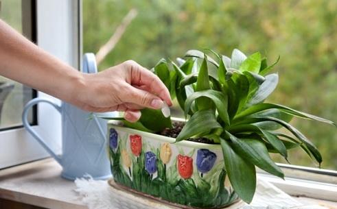 Домашние-растения