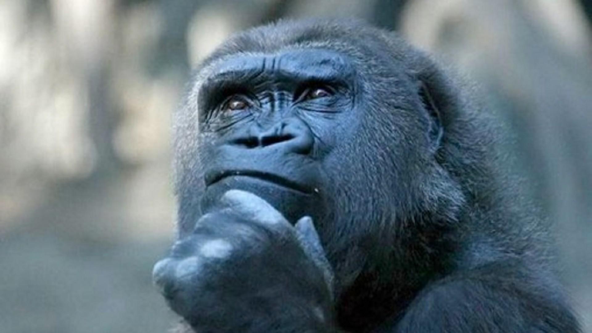 ежедневная картинка с тремя обезьянами мем фотограф при создании